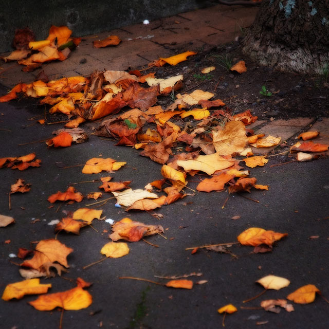 Autumn Leaves with gothic glow action