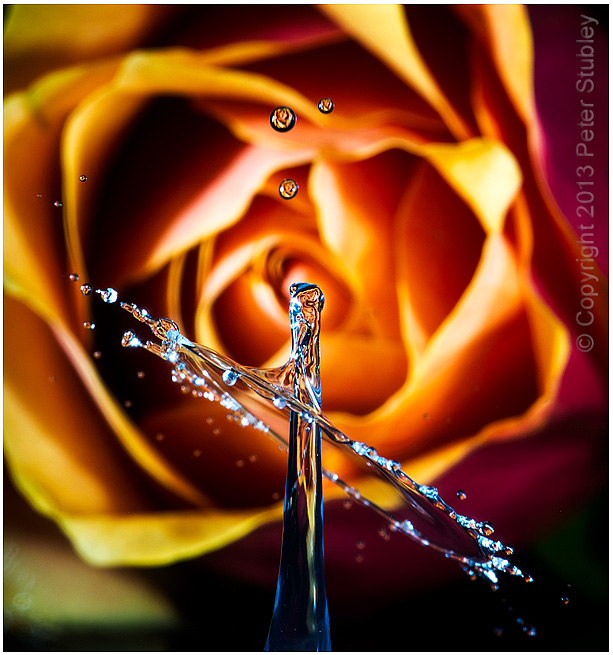 Rose splash.