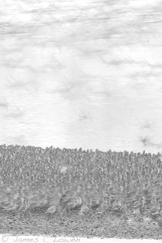 Estuary waders