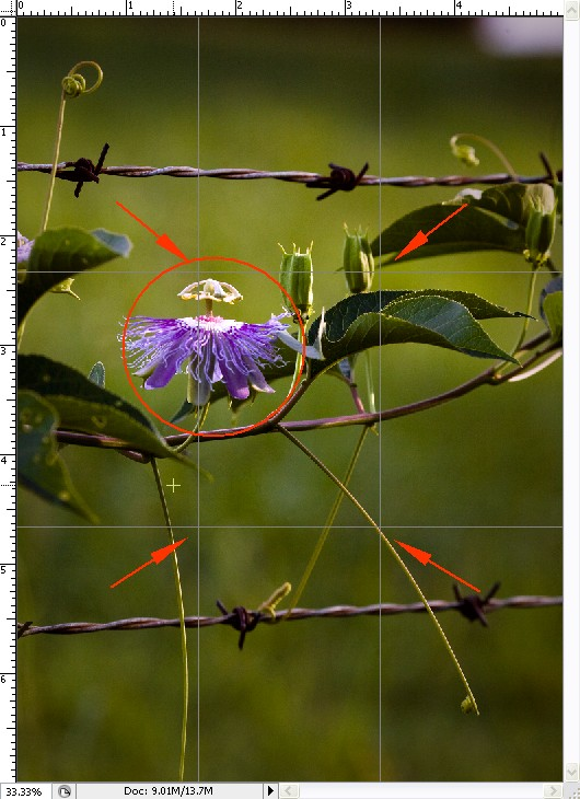 Natural Frames -- Passion Flower along Fence Line
