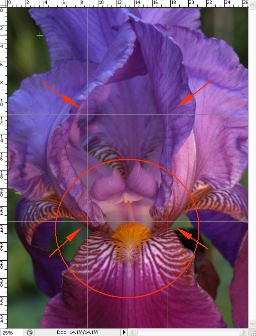 Existing Light for Drama -- Purple Iris