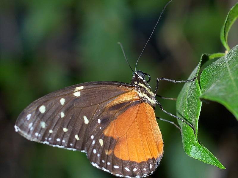2009-07-29 Butterfly