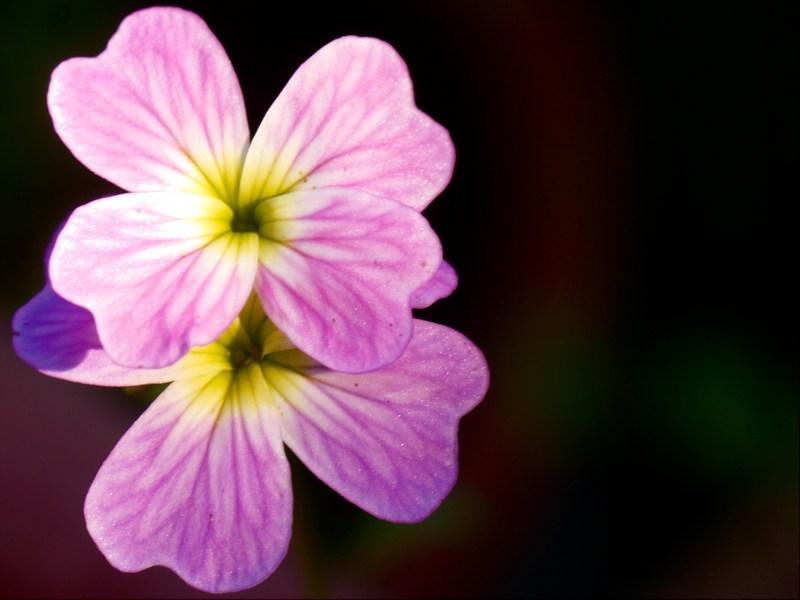 2010-07-07 Double flower