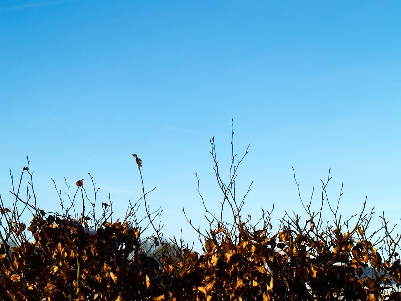 2011-01-29 Winter sky