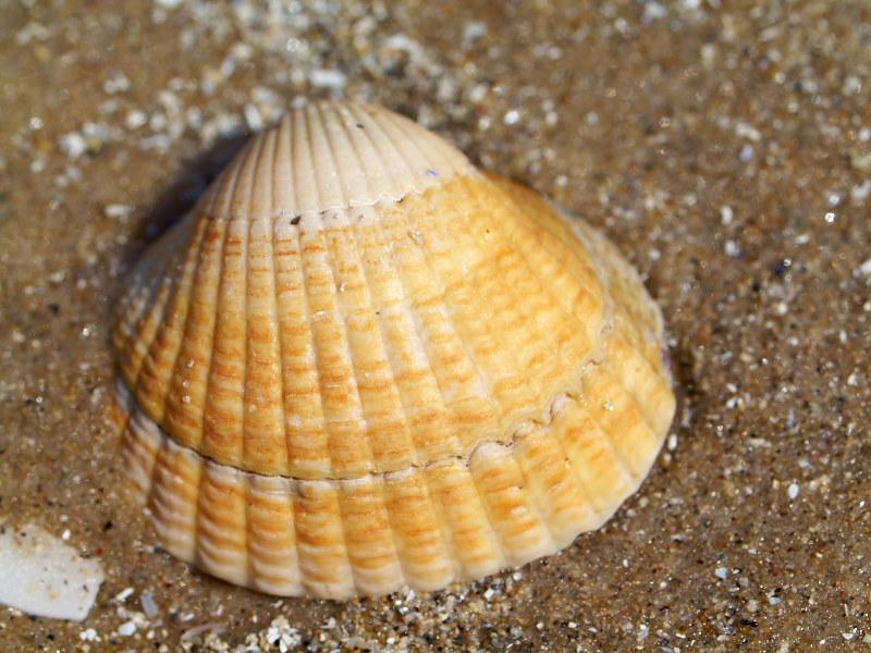 2011-07-18 Shell