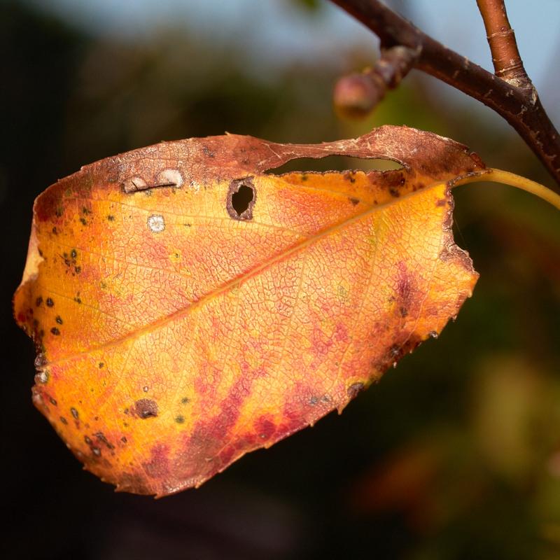 2011-09-25 Leaf