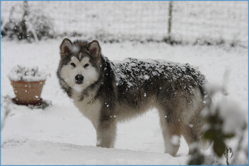 First snow for Jake.JPG