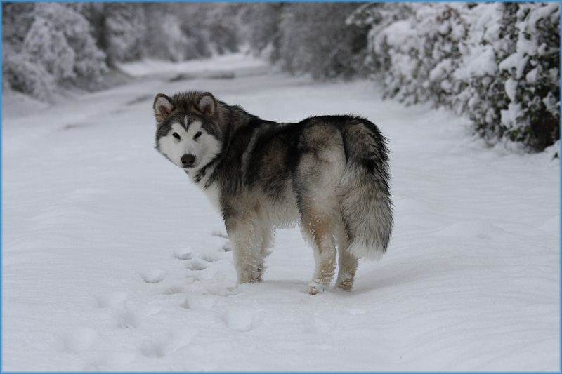 Jake in the snow