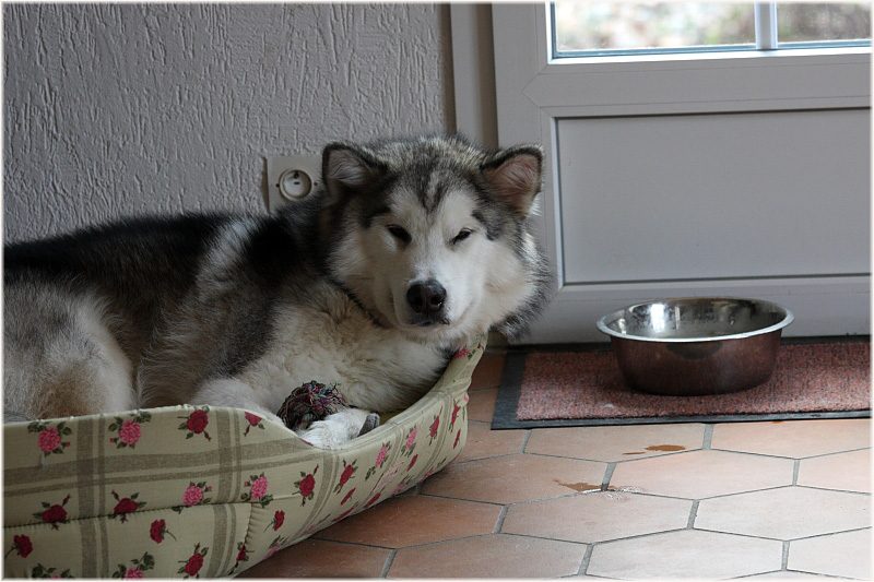 Jake in his bed.JPG