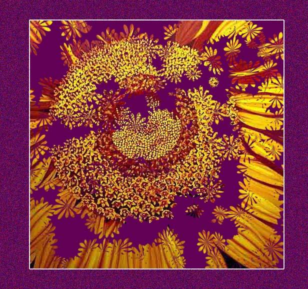 magic sunflower