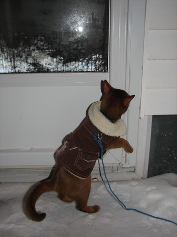 Can you let me in????