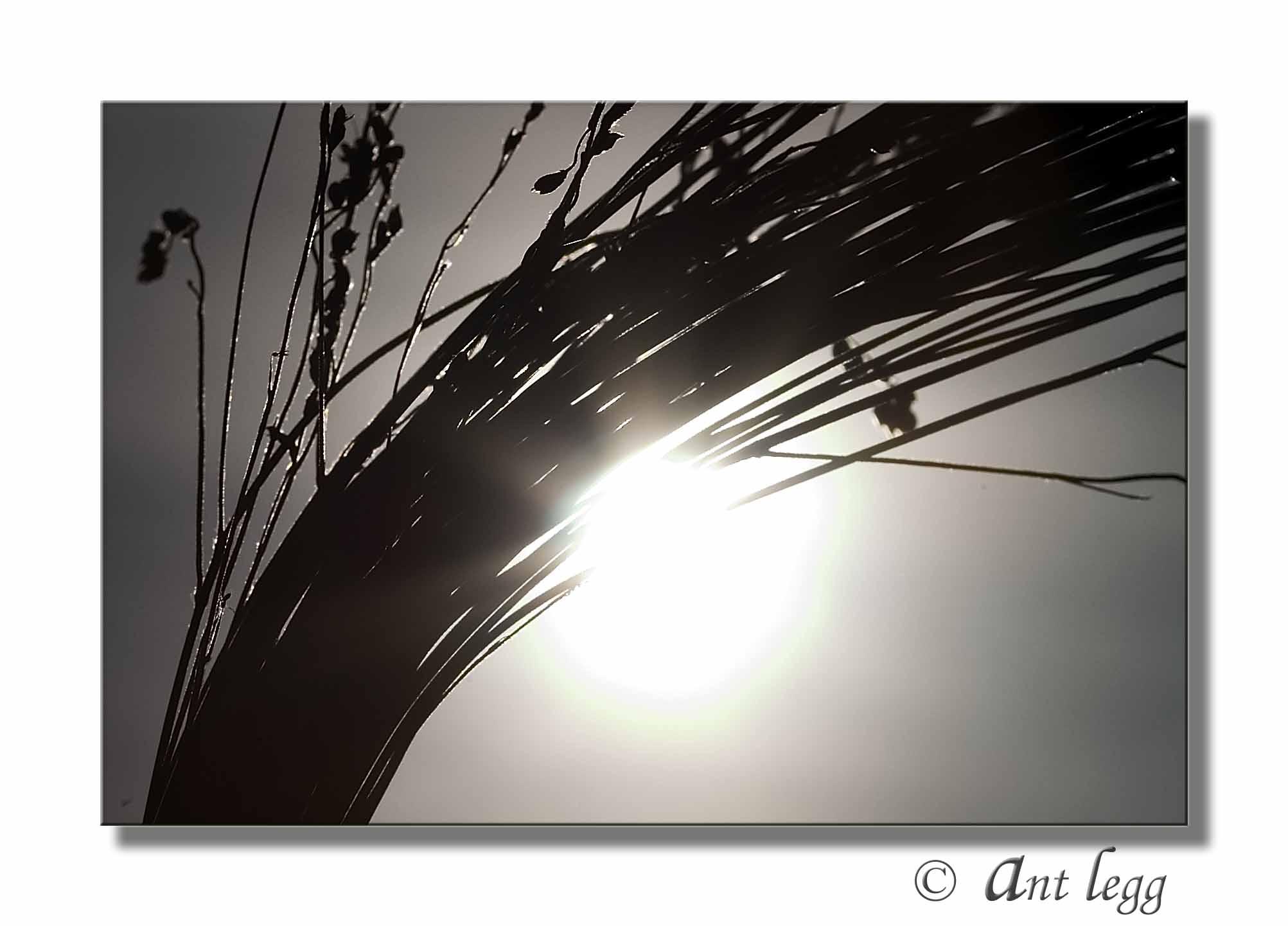 Wheat Bushells