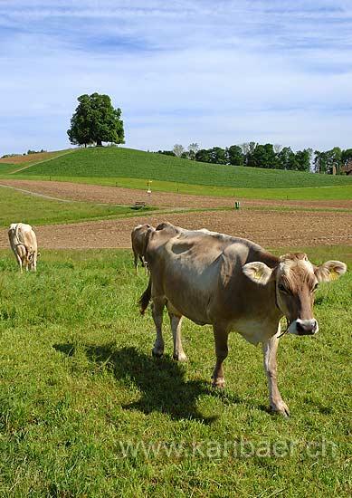 Landwirtschaft (74367)