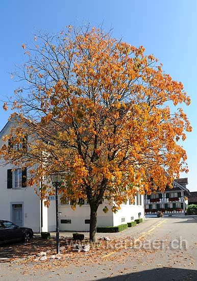 Neuheim (116569)