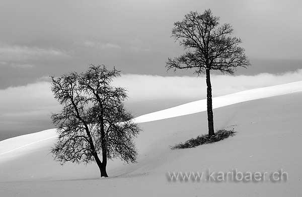 Baeume / Trees (0063)