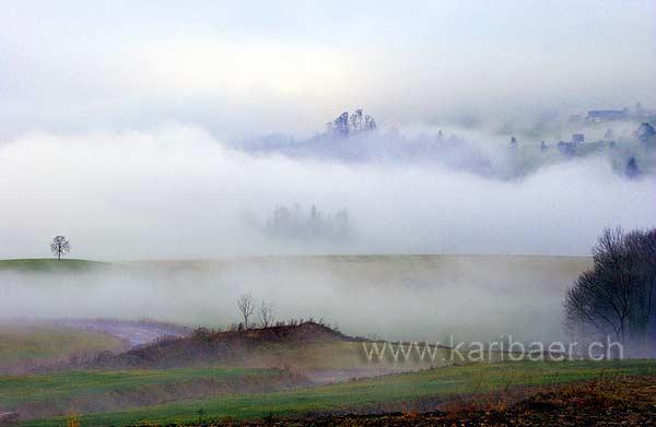 Nebel (8279)