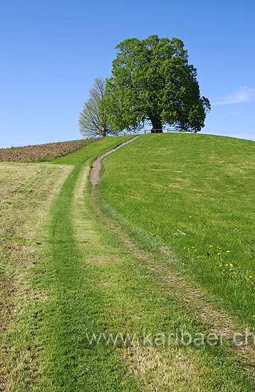 Weg zum Huegel (6788)