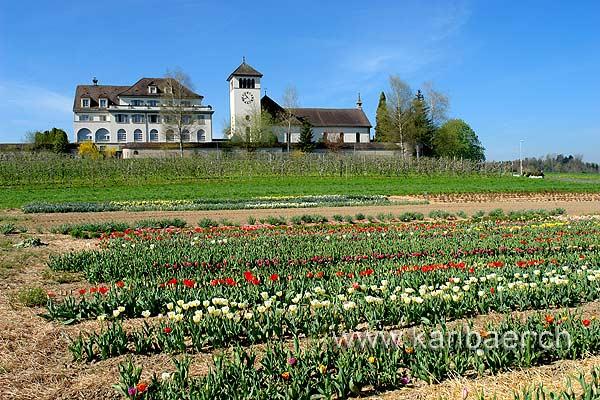 Kloster (73662)