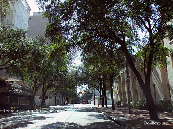 2010 - shady Marion Street looking southward with the Federal Building on the left side  (#4110)