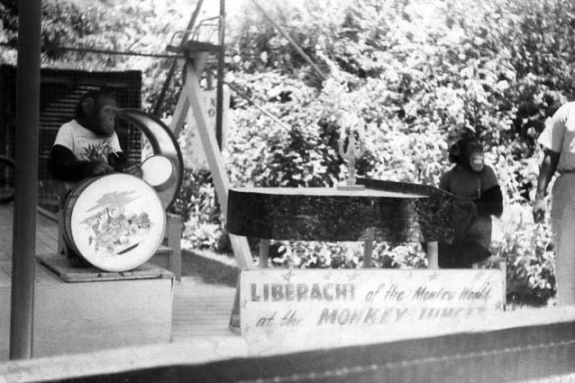 1963 - Liberachi playing at the Monkey Jungle