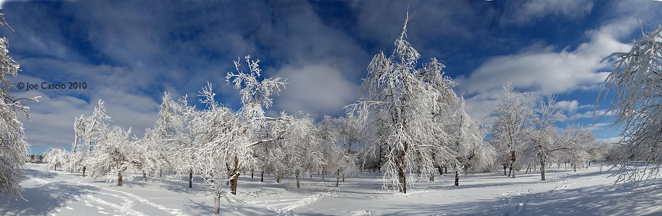 2010_Ice_Forest.jpg