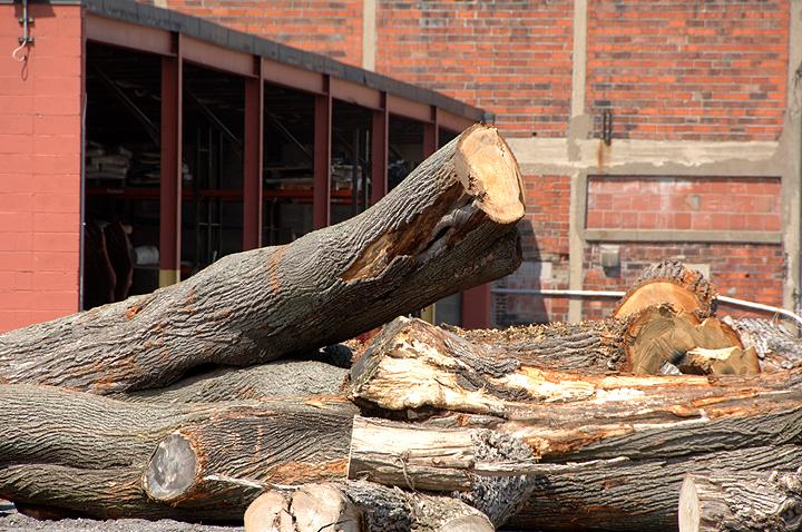 Tree_trunks_01.jpg
