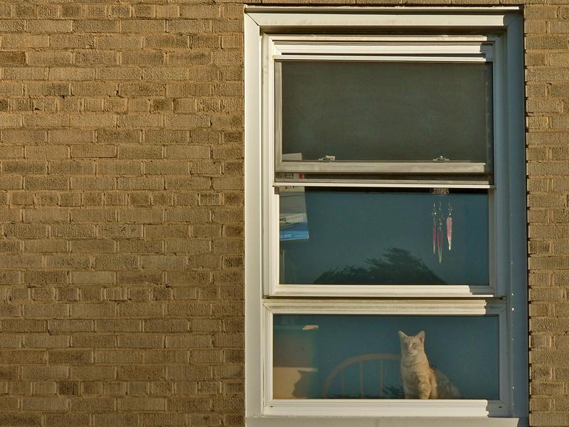Cat in Window - Former WV Hotel