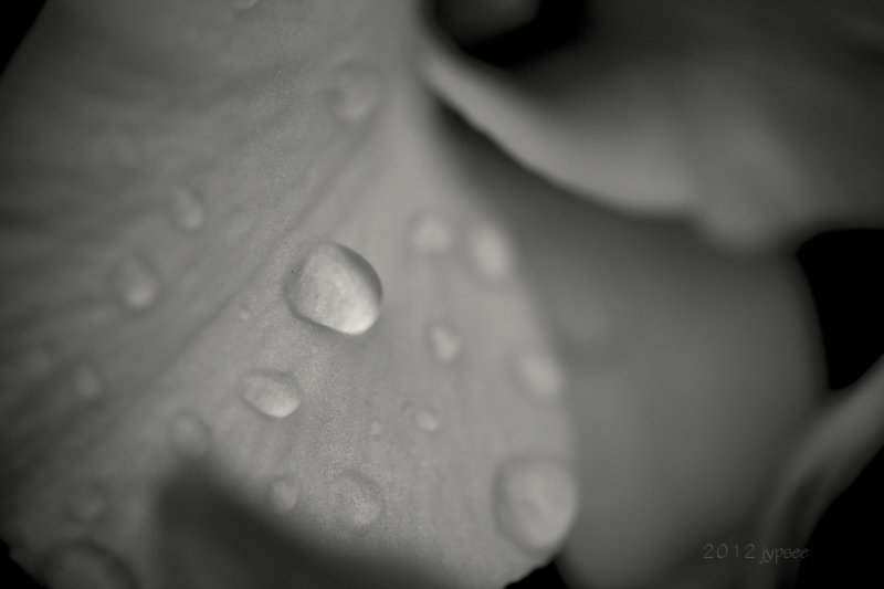 a bit of rain in black and white