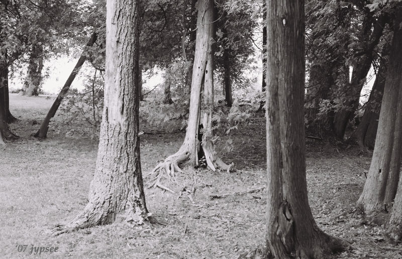 my favorite grove