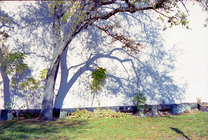 trees and shadows in color