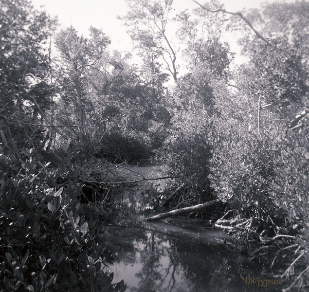 in the big cypress
