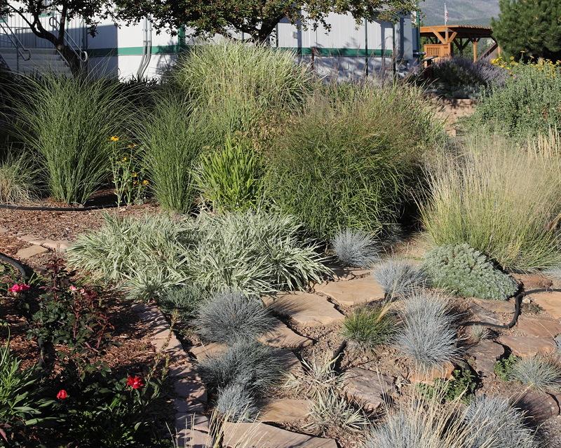 Grass Garden (5979)