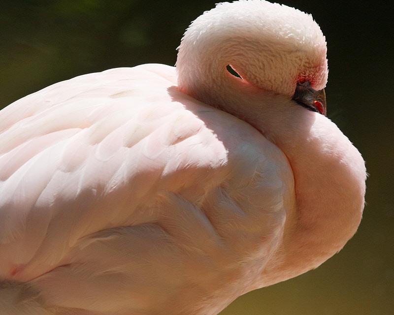 Flamingo (9642)