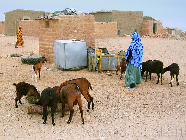 Sahara118.jpg