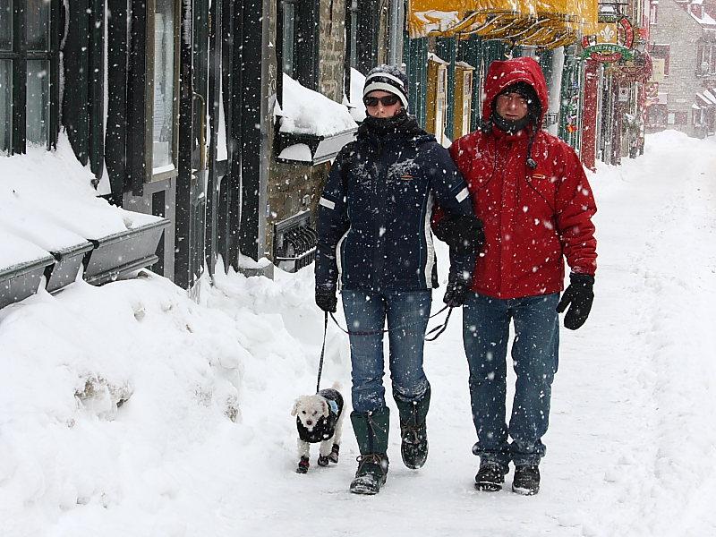 À Québec, manteaux et bottes sont de rigueur, même pour les toutous