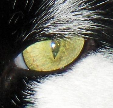 Frederiks eye