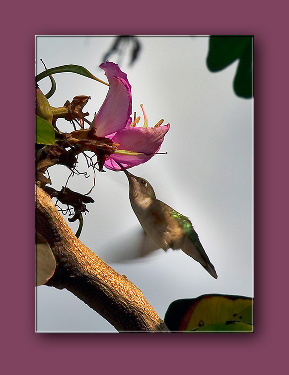 Orchid Tree Visitor