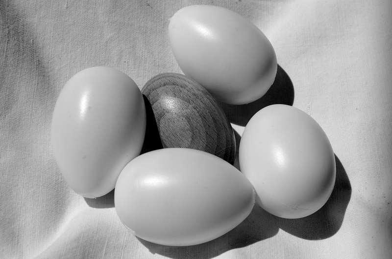 White eggs - egg gray