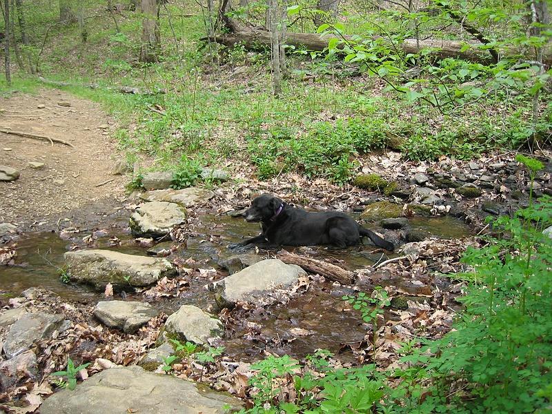 Slaughter Gap Trail 11.BJH.jpg