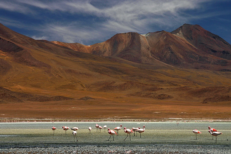 Bolivia - More Flamingos 1