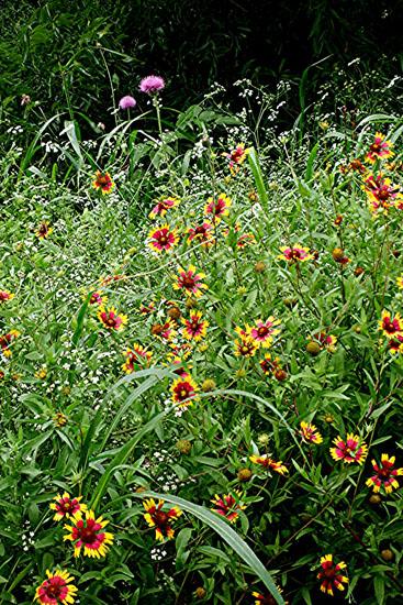 Spring Wildflowers 2007  10.jpg