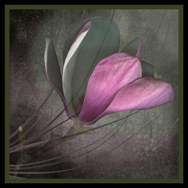 Magnolia_on_Gray_III-Marsha_Tudor