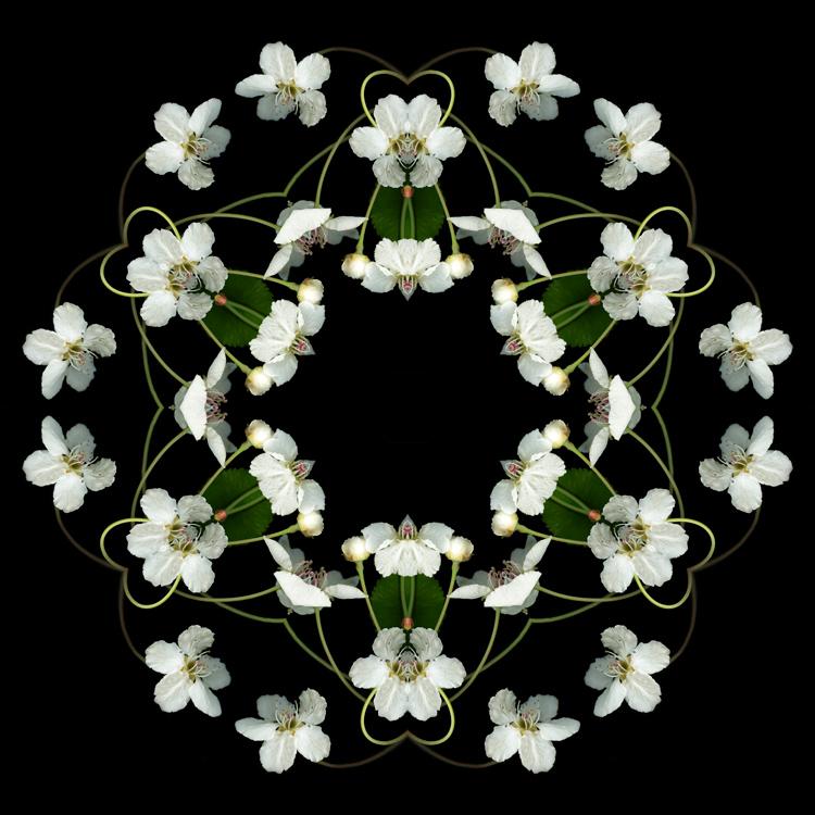 Orbits-Marsha_Tudor