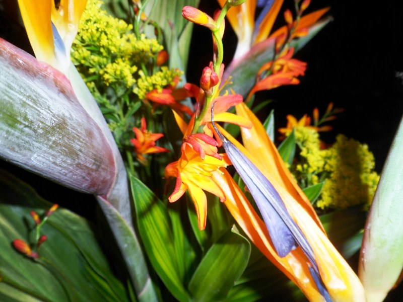 Strelitzia Flower in Bosque Tropical - Jardin Botanico.jpg