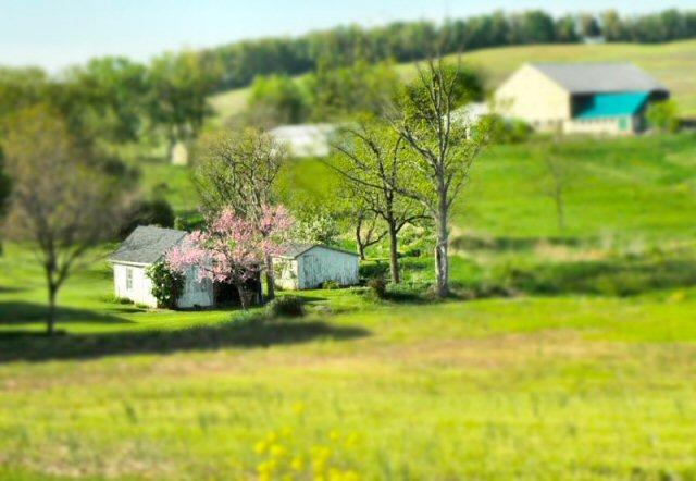 mini springtime sheds