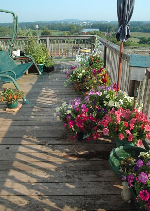 deck garden full vu_080207_0012