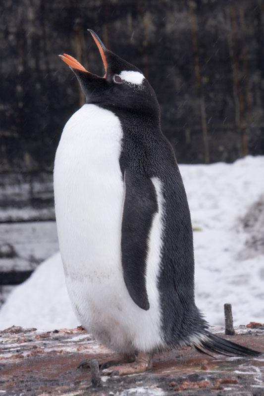 Antarctica 074