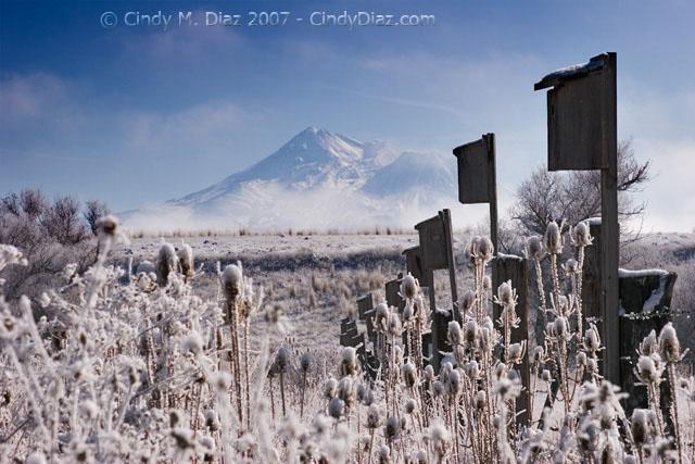 Frosty View II