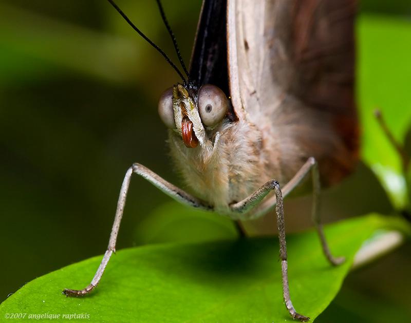 _MG_8679 butterfly cw.jpg