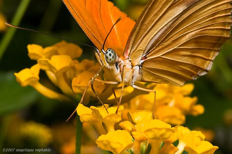 _MG_8659 butterfly cw.jpg